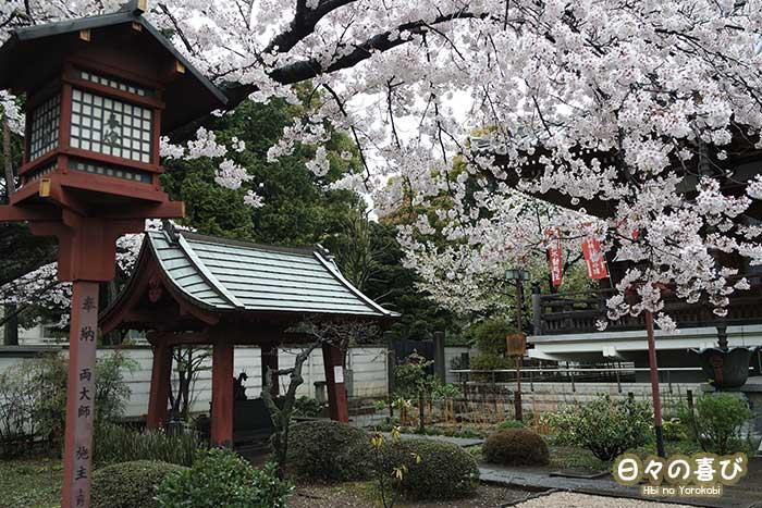 floraison sakura kaneiji kaisan-do ueno