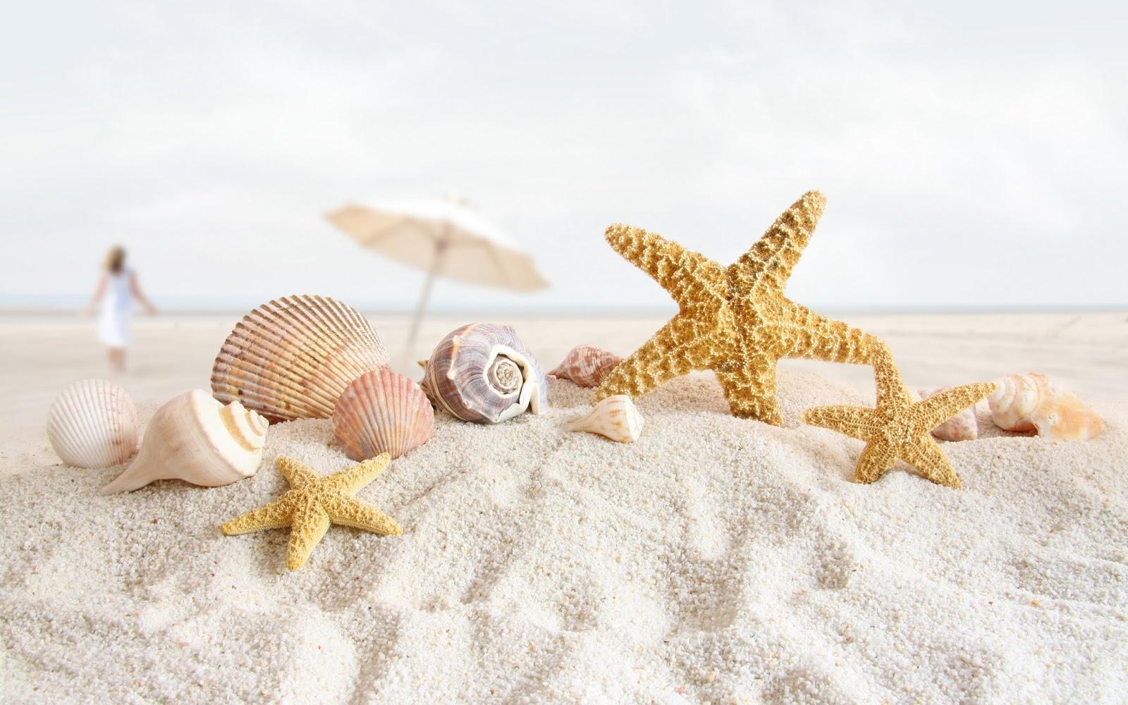 صورة جميلة علي الشاطئ