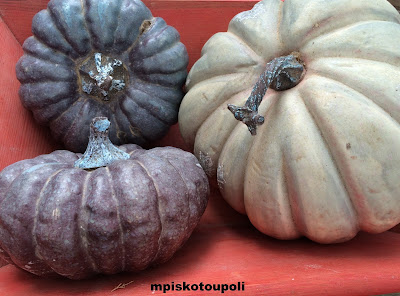 autumn time for pumpkin or not 5