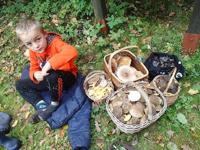 grzyby 2017, grzyby w październiku, jadalne podgrzybki, czubajki, borowiki, lejkowce dęte, pieprzniki ametystowe