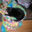 Life in the Slow Lane: Quilt Inspector on Duty