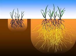Pengertian Fungi (Jamur) dan Peranannya Dibidang Pertanian