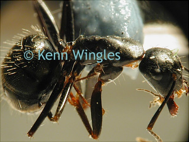ants under the microscope (image)