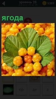 На всем изображении расположена ягода желтого цвета обрамленная зелеными крупными листьями
