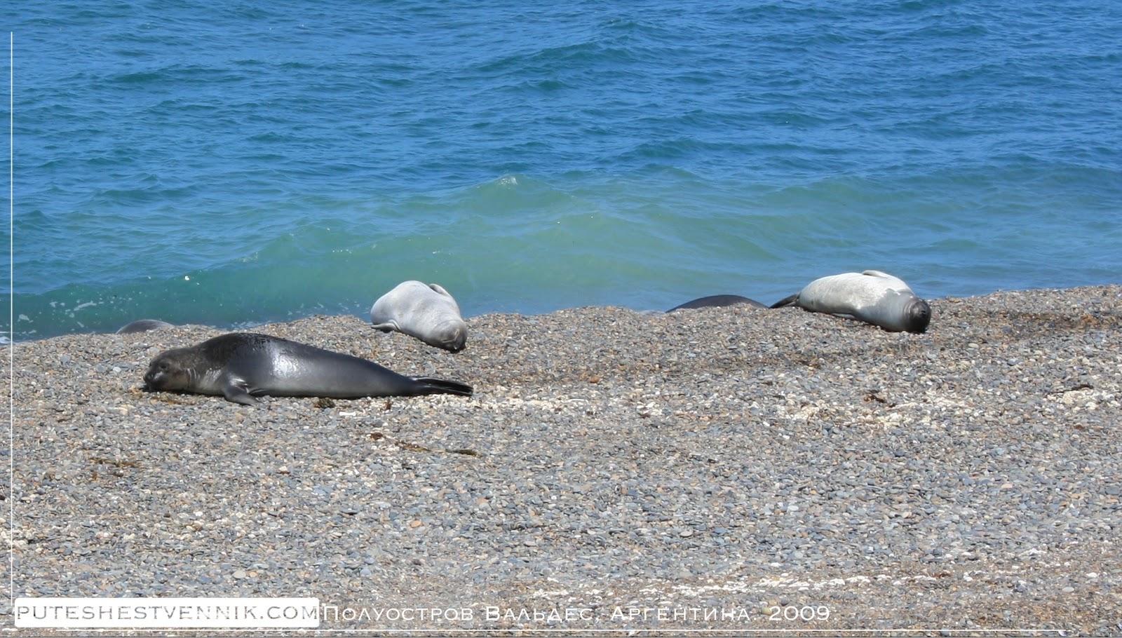 Тюлени полуострова Вальдес