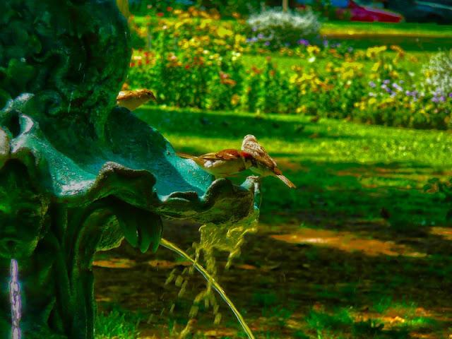 2 gorriones en fuente de agua en plaza.
