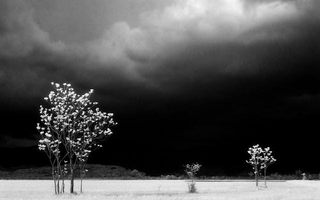 Elio Ciol, Prima del temporale