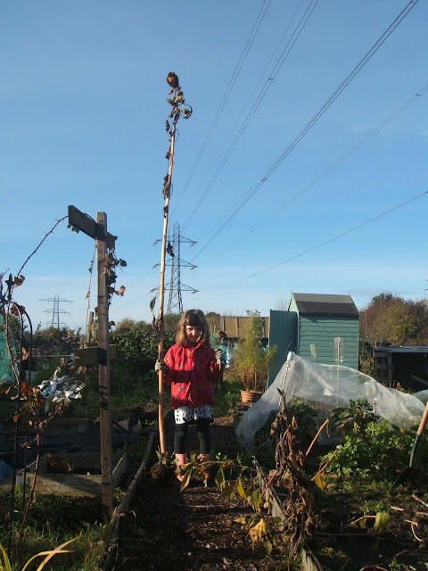 autumn clear up on the allotment plot