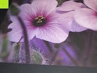 Blume: Laurent Pinsard 2016 - Triplets Posterkalender Naturkalender quer - 64 x 48 cm