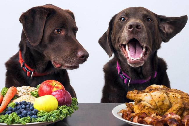 Jakie warzywa może jeść pies?