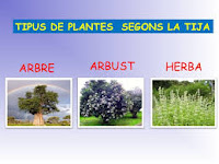 http://www.juntadeandalucia.es/averroes/centros-tic/41009470/helvia/aula/archivos/repositorio/0/74/html/datos/03_cmedio/03_Recursos/actividades/04/act3.htm