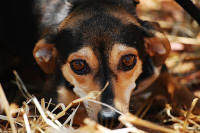 ¡Cuidado! Alerta por un secuestrador de perros