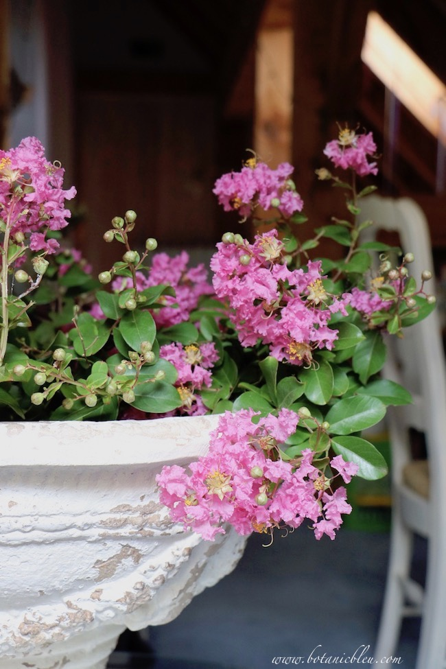 French Country white urn filled with pink crepe myrtle blooms