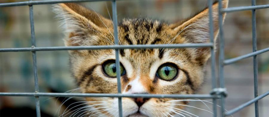 Bring new cat home