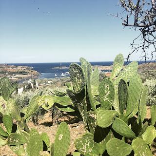 cactus espagne cadaques
