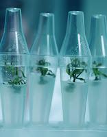 Extrato de Células Estaminais Vegetais de Gardénia
