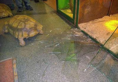 Tierbild lustig - Schildkröte bricht aus