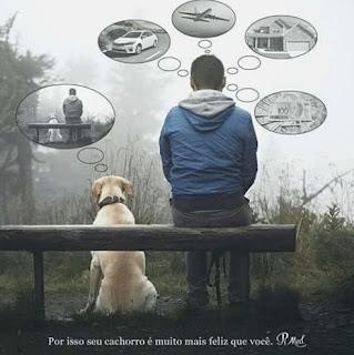 Foto em dia nublado no campo,  um homem e um cão labrador bege com coleira de couro marrom de costas, sentados, à esquerda, o cão sobre a relva e o homem, em um banco rústico de madeira. Acima e ao redor da cabeça do homem, quatro balões de pensamentos, em sentido horário: um carro na estrada; um avião em voo; uma casa; uma cédula de cem reais sobre um leque de outras cédulas.  Acima da cabeça do cão, um balão: a foto do momento.  No rodapé lê-se: Por isso seu cachorro é muito mais feliz que você.