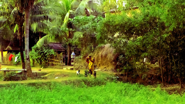 village rural life west bengal india