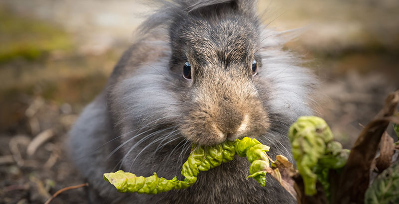 L'obésité chez nos petits animaux de compagnie