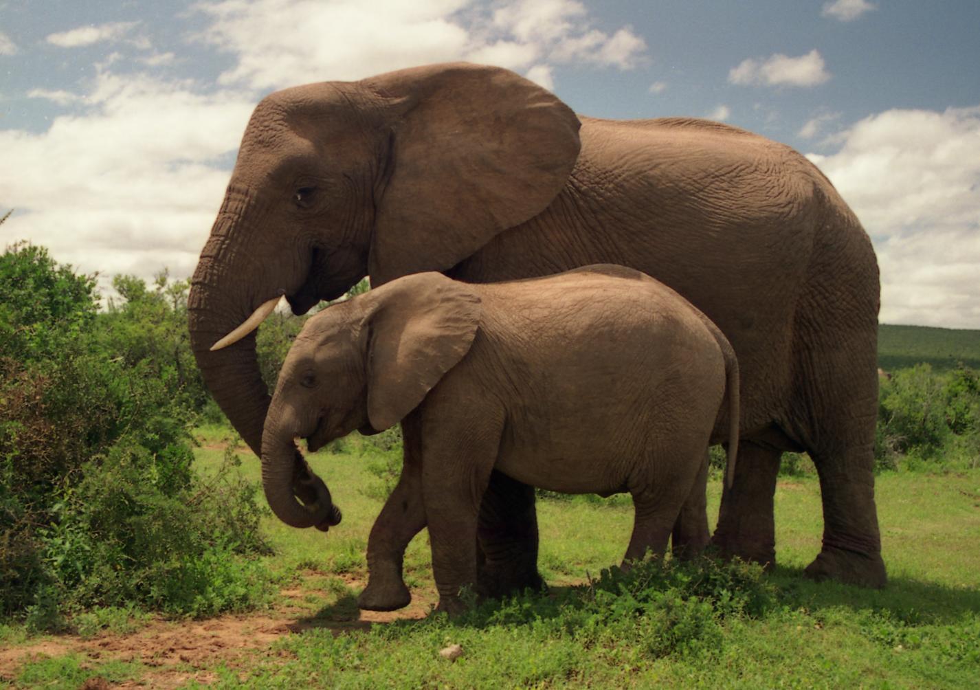 Wallpaper download elephant - Images Elephants