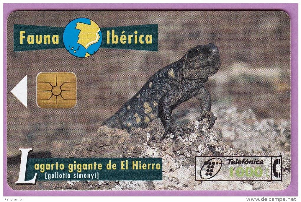 Tarjeta telefónica Lagarto gigante de El Hierro (Gallotia simonyi)