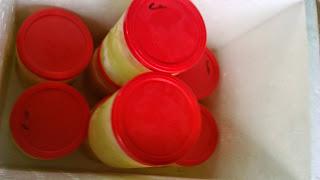 gudang lebah menjual royal jelly murni di tangerang banten