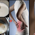Garlic Milk Recipe: For Back Pain and Sciatica Relief