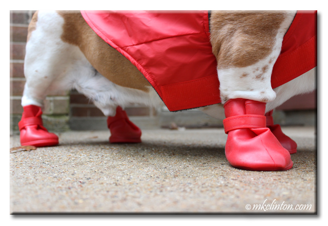 Red Jelly Wellies rain boots.