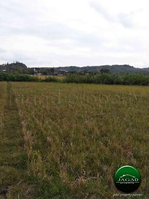 Tanah Produktif Murah dekat Kasongan Permai