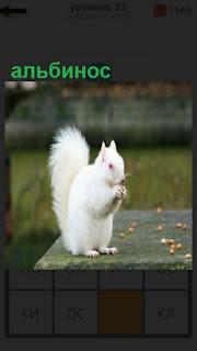 1100 слов белка альбинос щелкает орехи 33 уровень