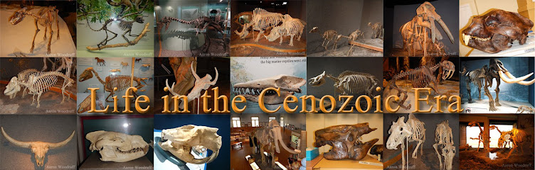 Life in the Cenozoic Era