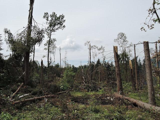 Последствия урагана на западе Подмосковья