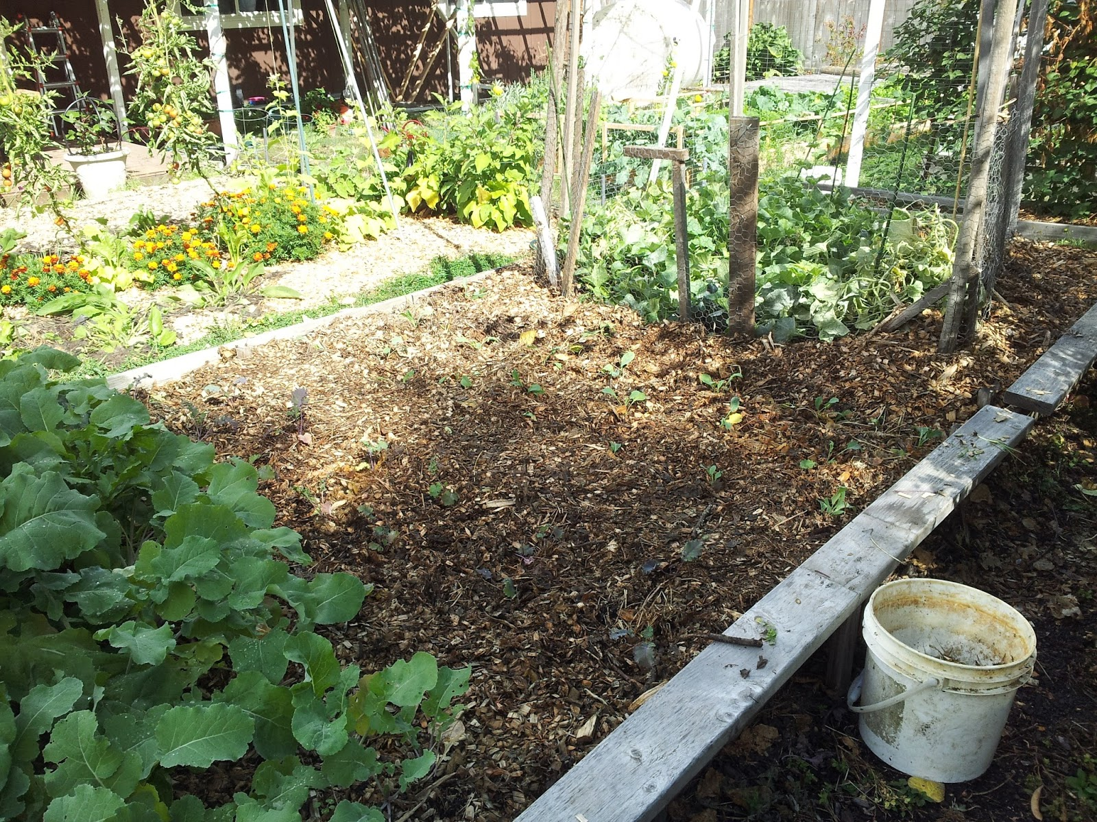 weeding for godot at last i managed a fall and winter garden
