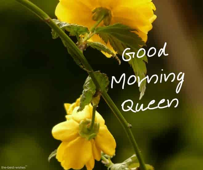 good morning my queen image with flowers