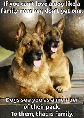 Funny dog pictures : Member of their pack