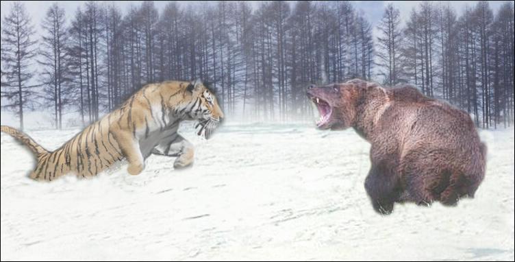 cobertura nuez maquinilla de afeitar  León contra oso - Wikifauna, Blogger de Google: León vs oso pardo, polar,  de kodiak, los osos más grandes del mundo