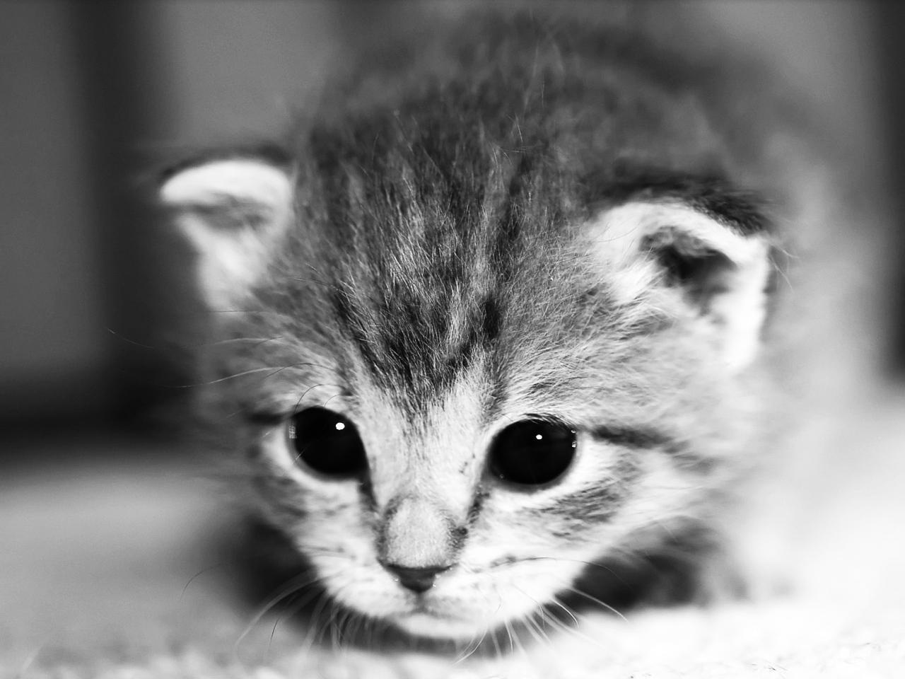 Fond d'écran chat noir et blanc - Fonds d'écran HD