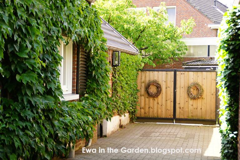Ewa in the Garden: 5 photos of small shady backyard ...