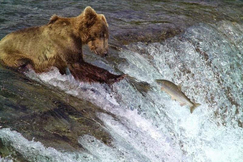 defenisi beruang