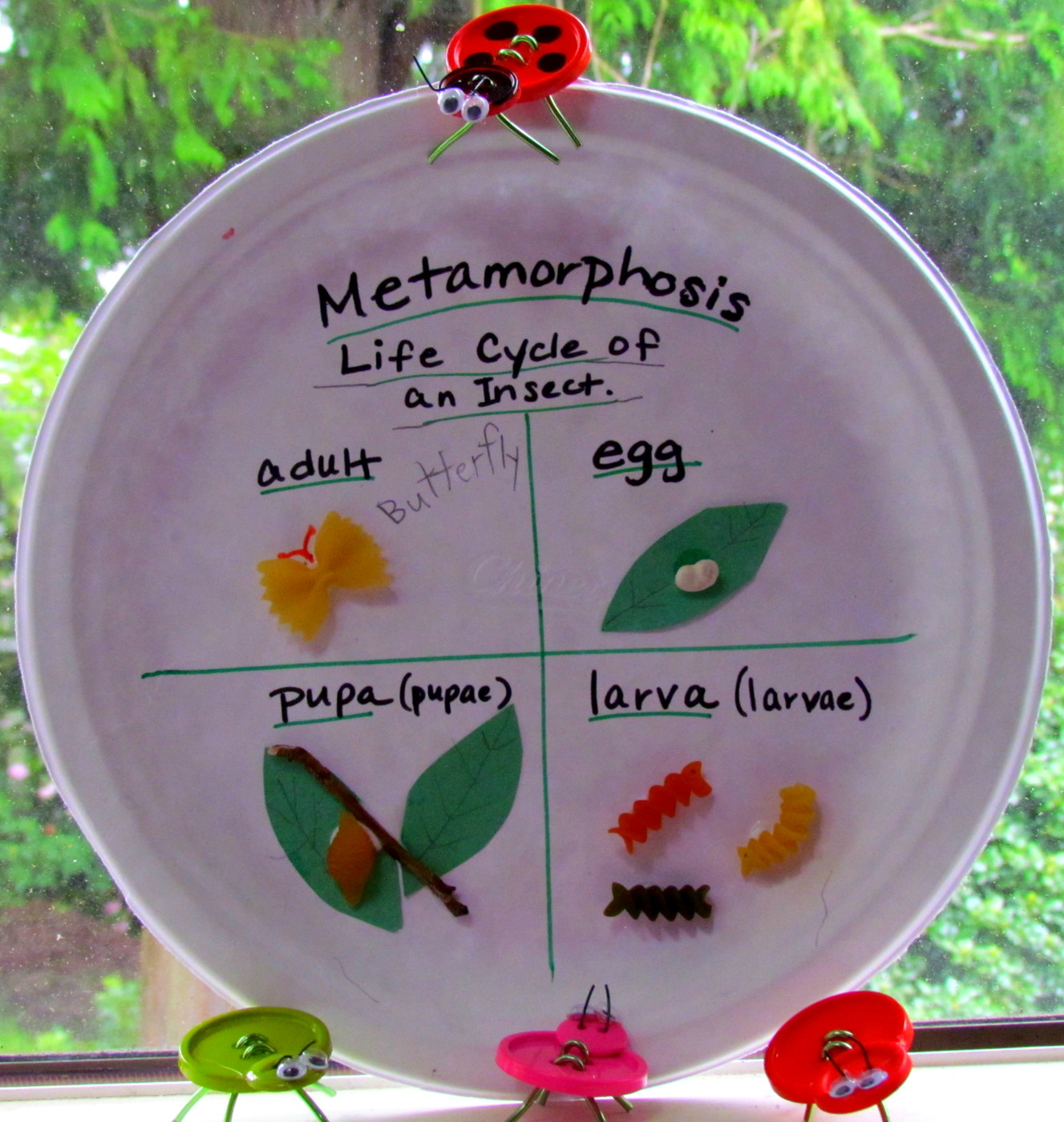 Learn To Grow Metamorphosis Paper Plate And Pasta Craft