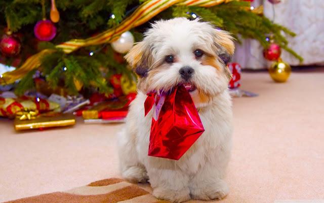 Hondje onder de kerstboom