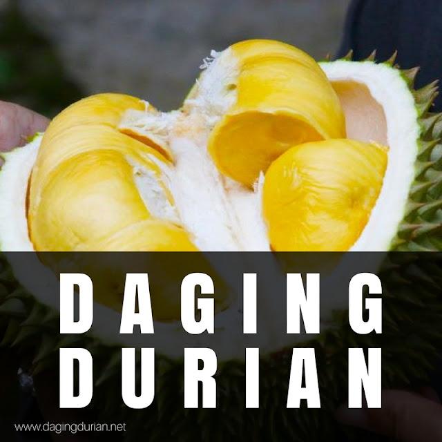 gudang-daging-durian-medan-maidanii-di-kutacane