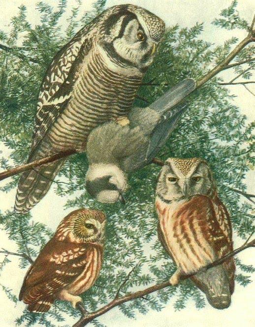 ArtbyJean - Vintage Clip Art: Groups of owls on vintage ...