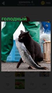 По земле идет голодный кот и держит в зубах большую рыбу, которую поймал