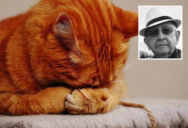 violencia crueldade com animais blog carlos romero