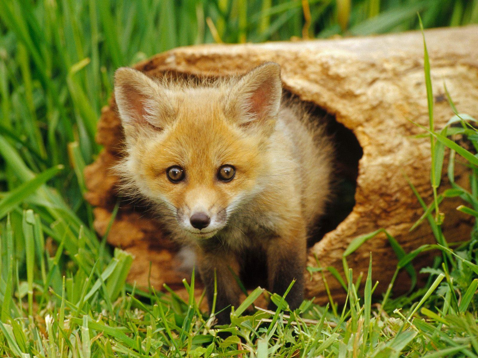 Cute Animal Wallpapers Free: Mix Animal Wallpaper Pack 2 (1600x1200)