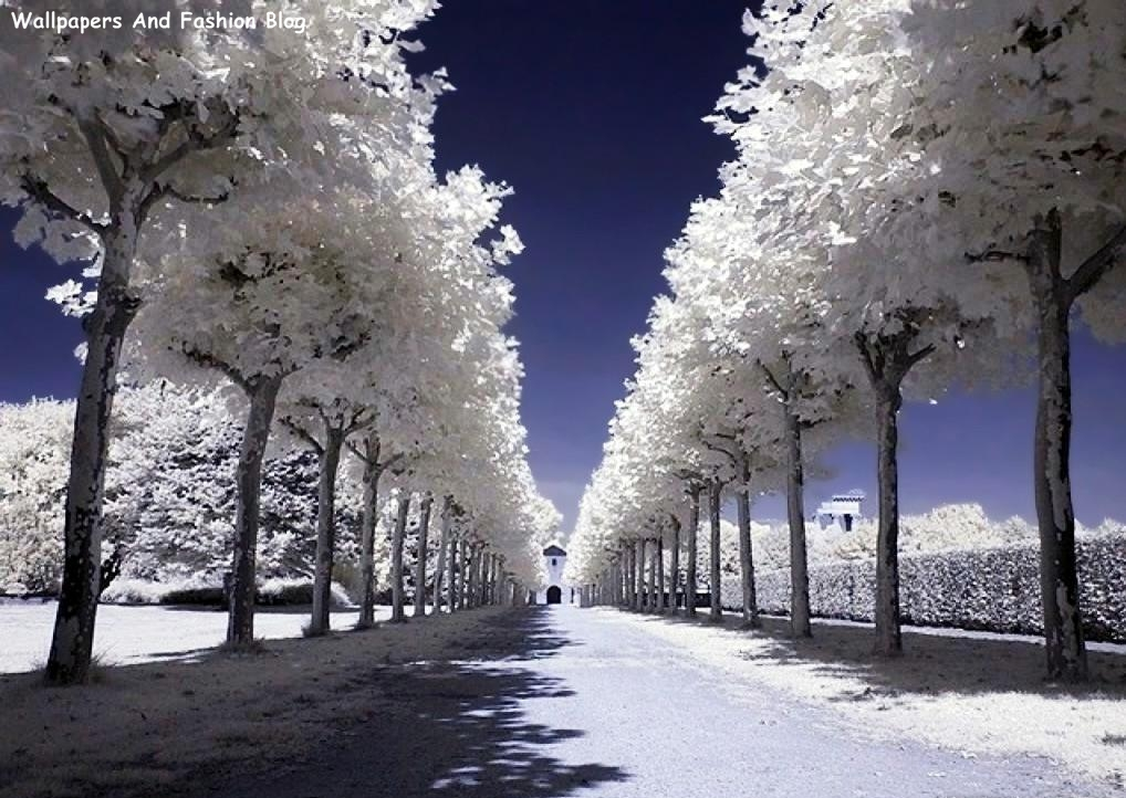 Top Beautiful Winter Snow Wallpapers Around The World