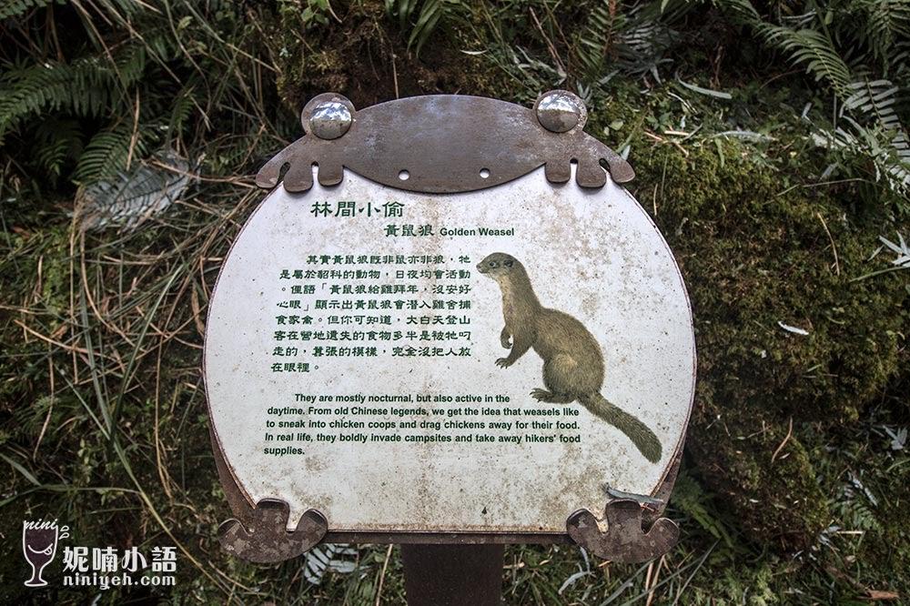 【太平山景點】翠峰湖環山步道。太平山重點健行步道