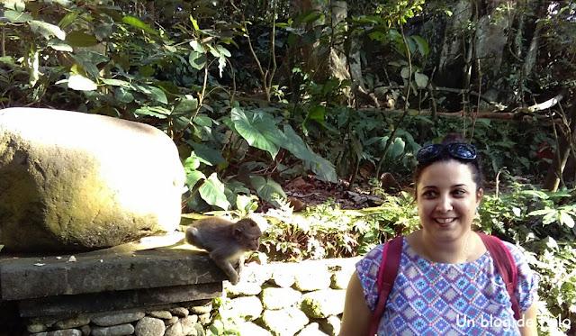 monos en Ubud, Bali